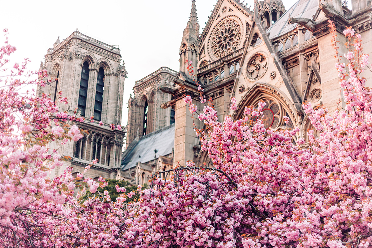 8e35916c3 SPRING IN PARIS 2018: THE BEST VIEWING SPOTS FOR BLOSSOM SEASON ...